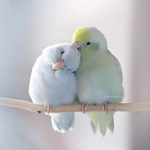 Сказочные фотографии с попугаями Рупы Саттон (14 фото)