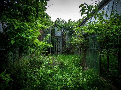Заброшенные объекты, завоёванные природой, в фотографиях Джонни Джо (9 фото)
