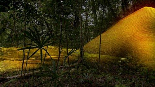 Лазерное картирование обнажило в джунглях Гватемалы 60 000 древних сооружений майя (7 фото)