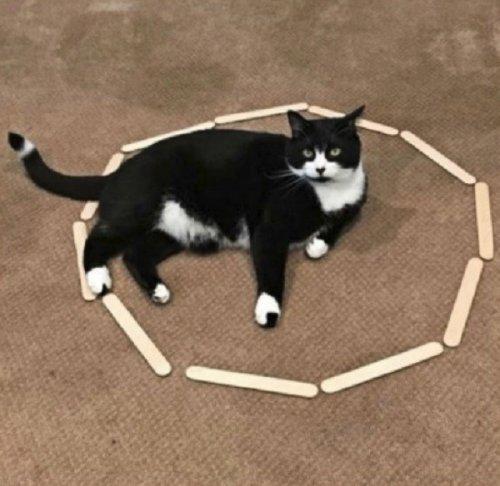 Смешные кошки, нашедшие гармонию внутри круга (11 фото)