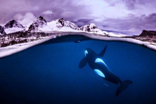 Работы победителей конкурса подводной фотографии 2018 Underwater Photographer of the Year Contest (27 фото)