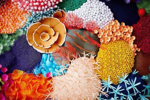 Разнообразие коралловых рифов на бумажной 3D-скульптуре художницы Мадемуазель Гиполит (21 фото)