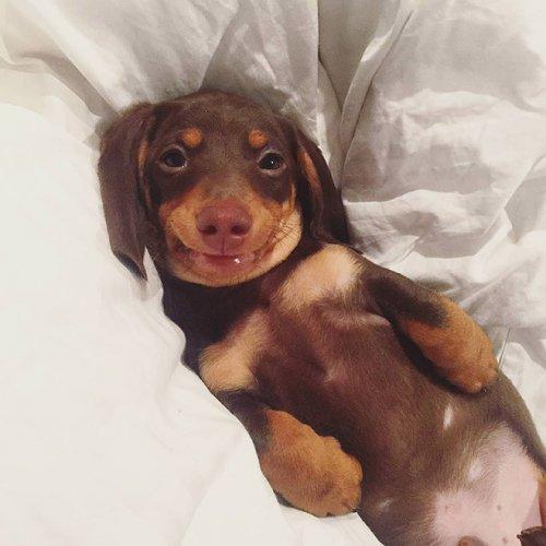 Собаки-улыбаки, которые поднимут вам настроение (18 фото)
