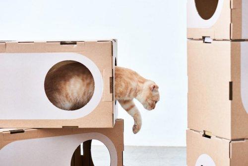 Картонные кошачьи домики от компании A Cat Thing (12 фото)