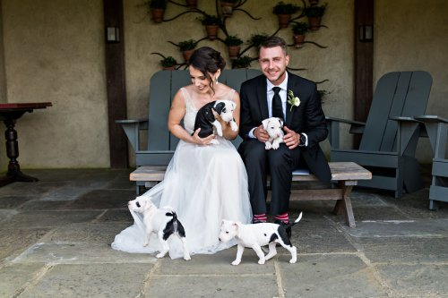 Вместо свадебных букетов эта пара решила держать на руках спасённых щенят, которые после свадьбы нашли себе новые дома (13 фото)