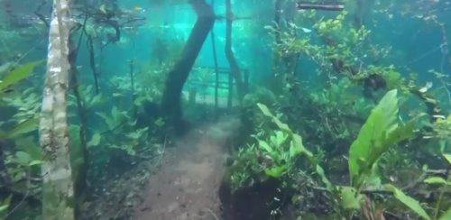 Наводнение в Бразилии превратило экологический заповедник в сюрреалистический подводный мир (3 фото + видео)
