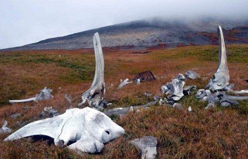 Кладбища китов (12 фото)