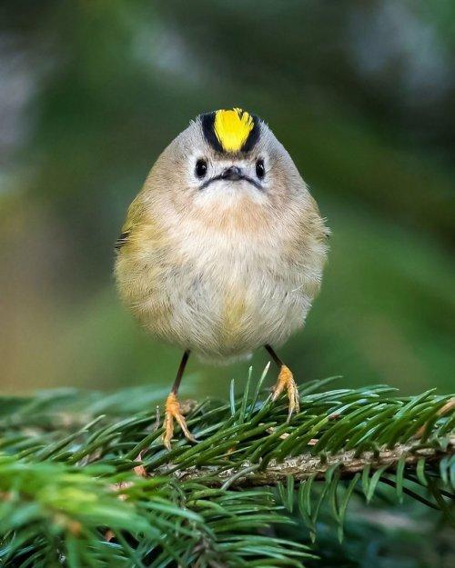 Angry Birds в реальной жизни (18 фото)
