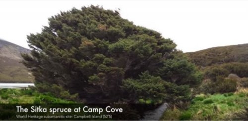 Самое одинокое дерево на Земле: увлекательная сказка о выживании (фото + видео)