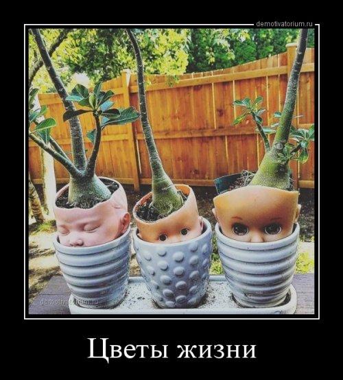 1519976389_demotivatory-17.jpg