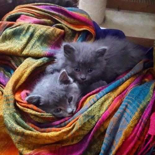 Счастливая история двух котят, спасенных от смертельных морозов (12 фото)
