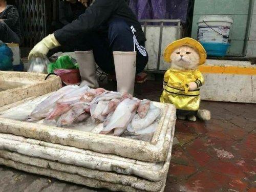 Самый очаровательный продавец рыбы во Вьетнаме, который покорит ваше сердце (14 фото)