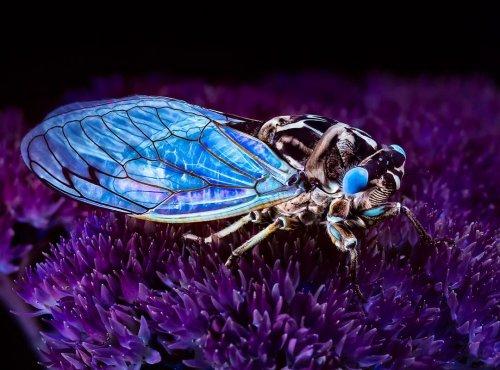 Фотографии растений и насекомых, сделанные под ультрафиолетовым освещением (24 фото)