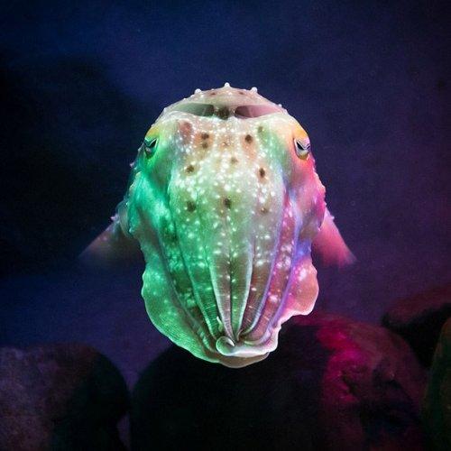 Топ-25: невероятные водные существа со странными и просто восхитительными способностями