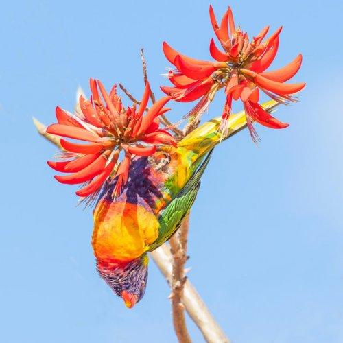 Красота и разнообразие птиц в фотографиях (20 фото)
