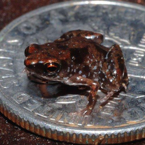 ТОП-25: Самые маленькие животные в мире, в существование которых вы не поверите