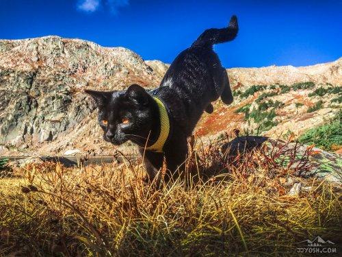 Кот-путешественник Саймон (12 фото)