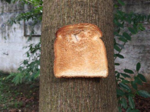 Новый тренд: хлеб, прикреплённый к дереву (20 фото)