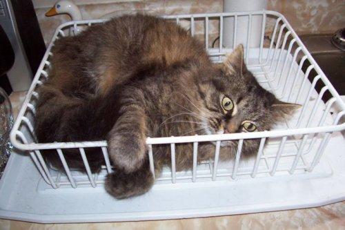 Заведите кошку, и ваша жизнь больше никогда не будет прежней! (34 фото)