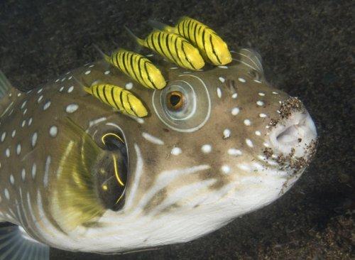 Подводные существа в фотографиях Марти Снайдермана (17 фото)