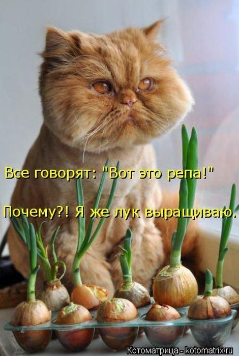 Новая котоматрица для настроения (37 фото)