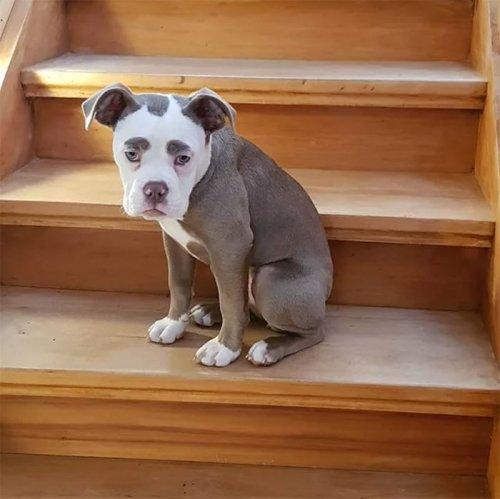 Самая грустно выглядящая собака по кличке Мадам Брови (9 фото)