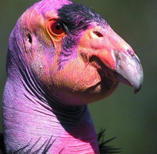 Топ-25: самые причудливые и уродливые животные, которые просто созданы для фильмов ужасов