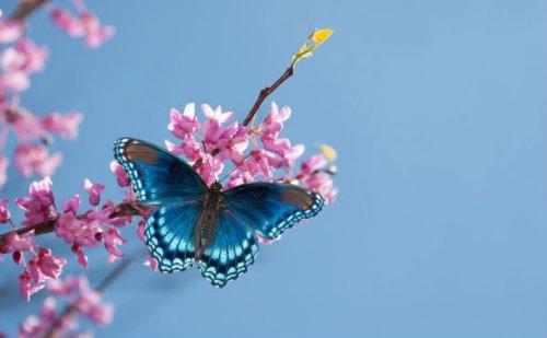 Красота и великолепие бабочек в фотографиях (23 фото)