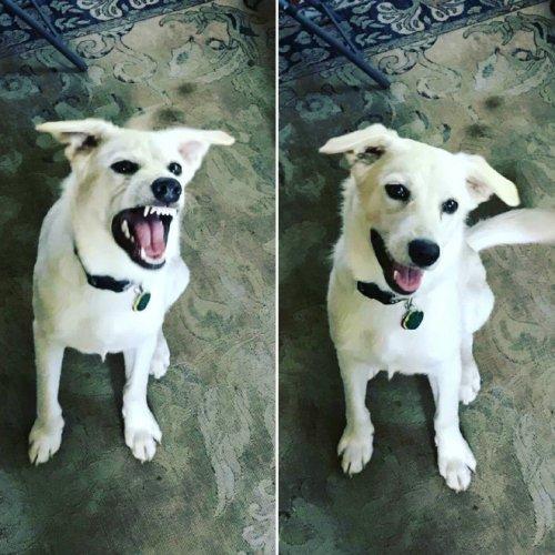 Смешные домашние питомцы до и после того, как их назвали хорошими мальчиками (19 фото)