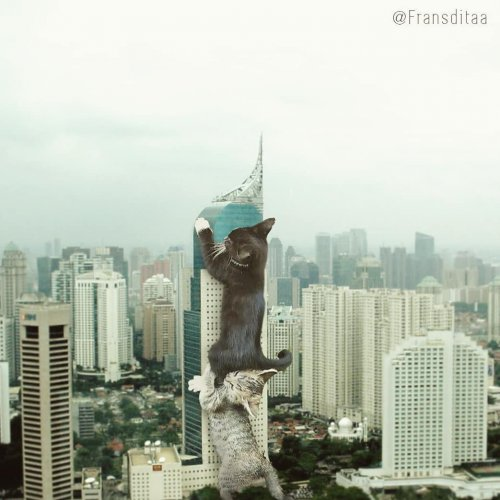 Котзиллы индонезийской художницы Франсдиты Муафидин (14 фото)
