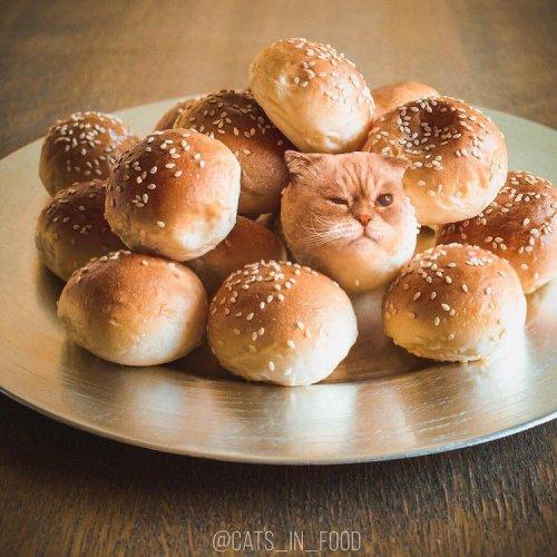 Кошки в еде в фотоманипуляциях Ксении Змановской (28 фото)