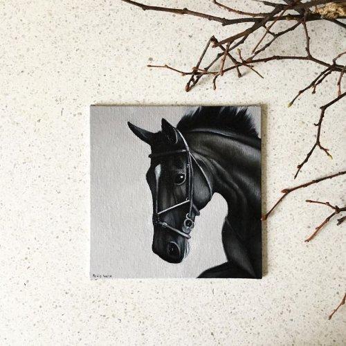 365 портретов лошадей за 365 дней (25 фото)