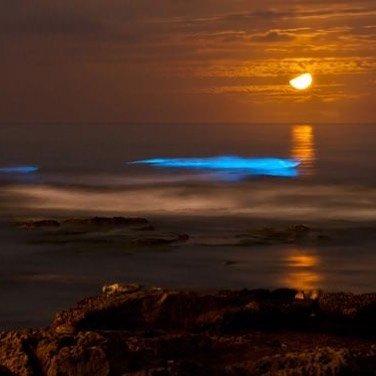 Биолюминесцентные волны вдоль побережья Сан-Диего (10 фото + видео)