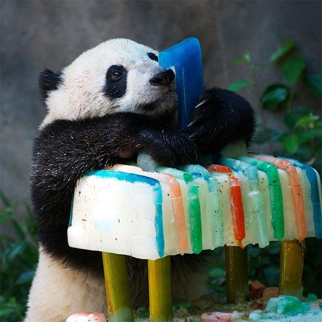 Картинка с днем рождения панда картинка