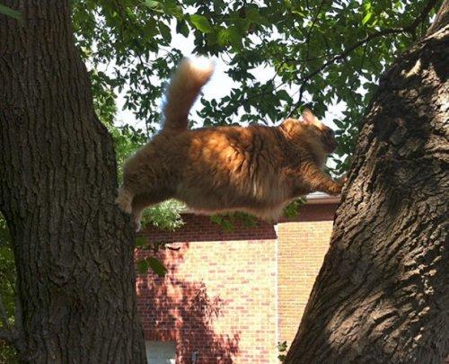 Смешные фотографии с кошками, заставляющие засомневаться в их умственных способностях (27 фото)