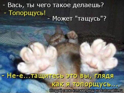 1525452241_kotomatricy-8.jpg