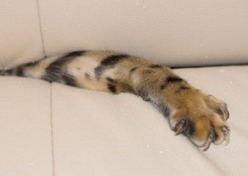 Кошки в диванах (11 фото)