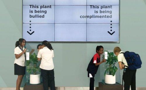 Компания IKEA попросила хвалить одно растение и критиковать другое, и вот что с ними стало через 30 дней (12 фото)