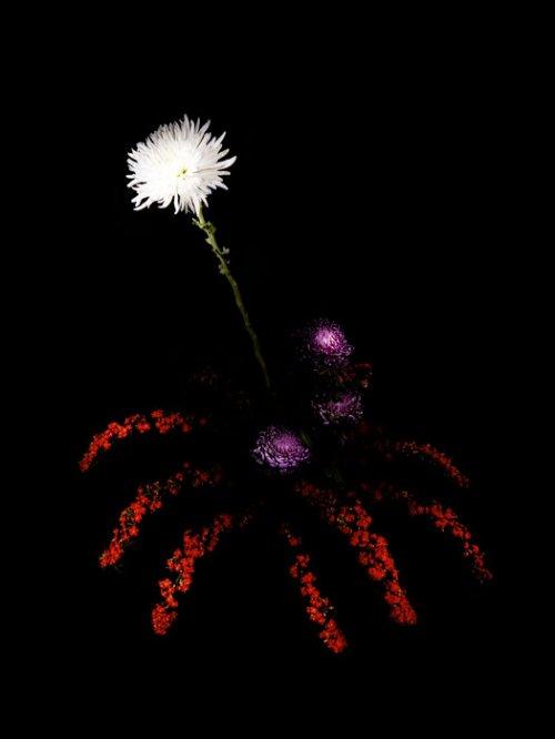 Цветочные фейерверки Сары Илленбергер (12 фото)