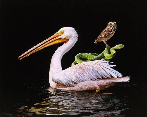 Реалистичные рисунки животных Лизы Эриксон (7 фото)