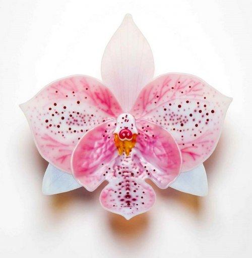 Стеклянные орхидеи Лауры Харт (10 фото)