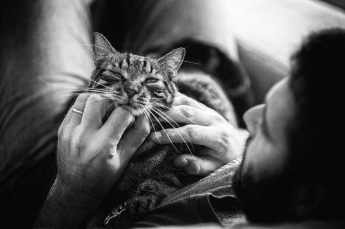 Мужчины и кошки через объектив фотографа Сабрины Боем (15 фото)