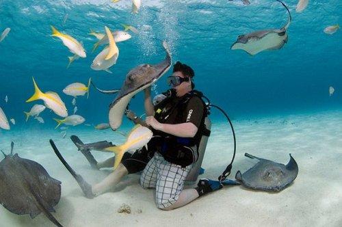 Топ-25: лучшие в мире места для подводного плавания с аквалангом