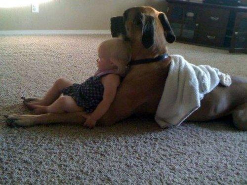 Очаровательные примеры безусловной любви собак, которые растопят ваше сердце (25 фото)