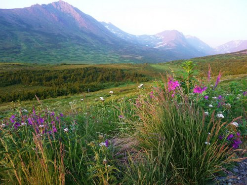 На Аляске тоже бывает лето (20 фото)
