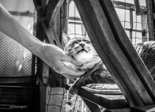 Как выглядит кошачье удовольствие (19 фото)