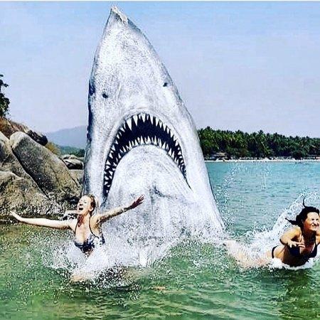 Гигантская акула-скала в Индии (8 фото)