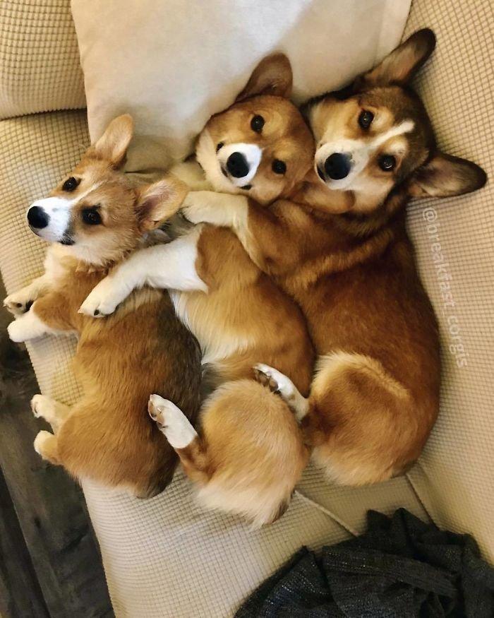 Картинки собак щенков смешные картинки, картинки
