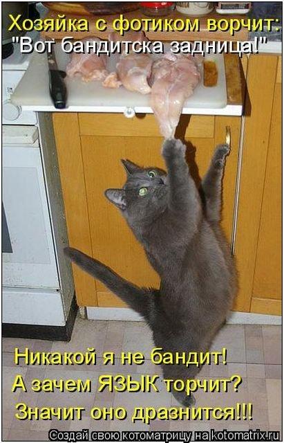 Новая котоматрица для всех! (35 фото)