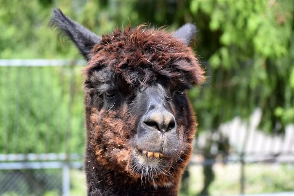 Смешные животные, которым не повезло с фотогеничностью (23 фото)